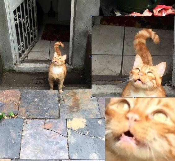 Cat - ELIS