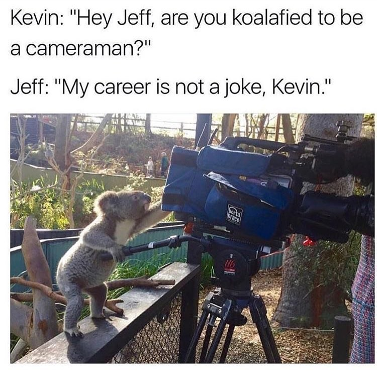 Funny meme about a koala filming stuff.