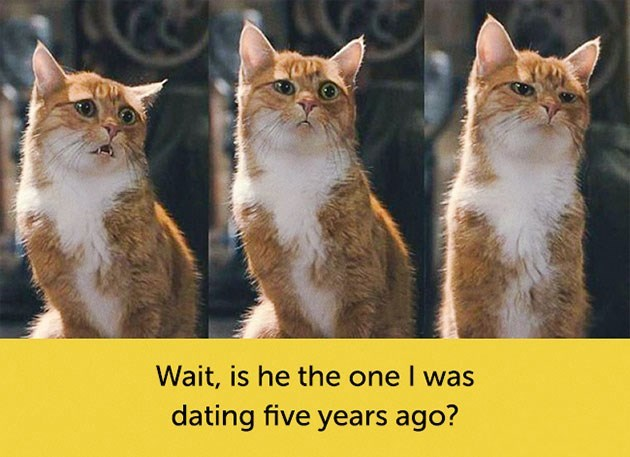 expressive - Cat - Wait, is he the one I was dating five years ago?