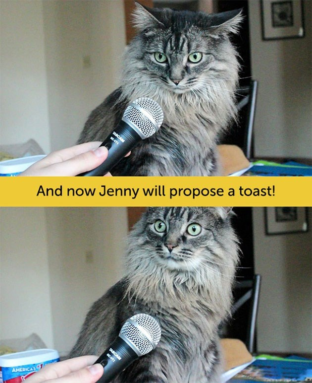 expressive - Cat - TABCA T And now Jenny will propose a toast! TABC AHERICAS