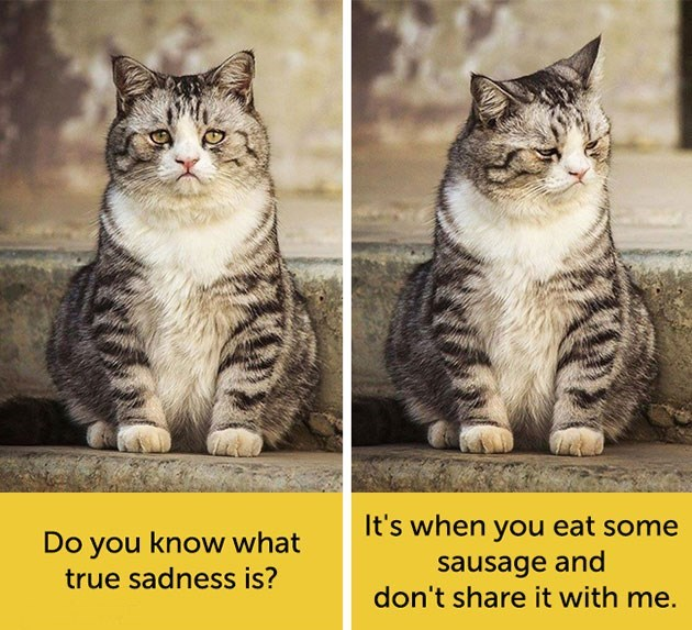 expressive - Cat - It's when you eat some sausage and don't share it with me. Do you know what true sadness is?