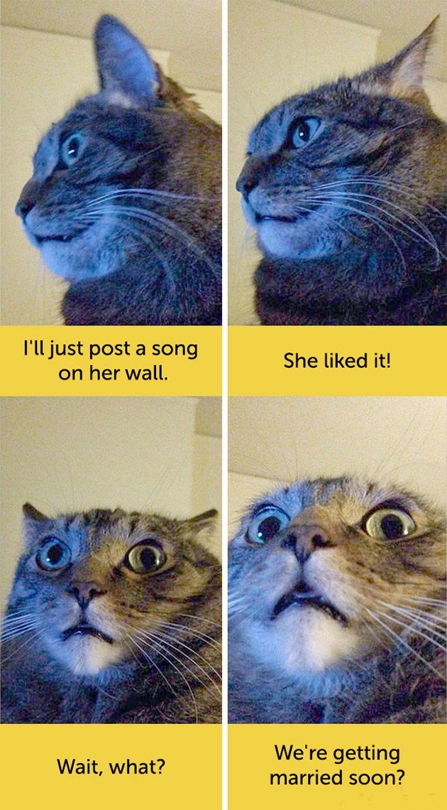 expressive - Whiskers - l'll just post a song She liked it! on her wall. We're getting Wait, what? married soon?
