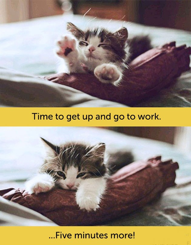 expressive - Cat - Time to get up and go to work. ...Five minutes more!