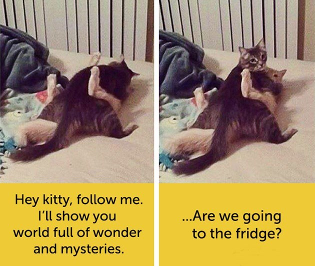 expressive - Cat - Hey kitty, follow me. I'll show you ...Are we going to the fridge? world full of wonder and mysteries.