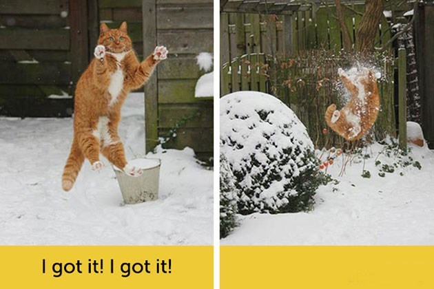 expressive - Snow - I got it! I got it!
