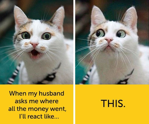 expressive - Cat - When my husband asks me where THIS all the money went, I'll react like...