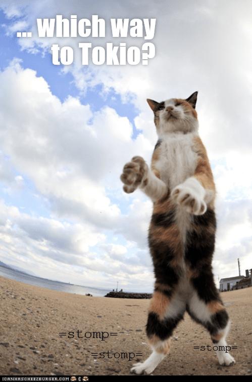 Cat - which way to Tokio? =stomp= =stomp= Estomp= IOANHASOHERBURGER.COM