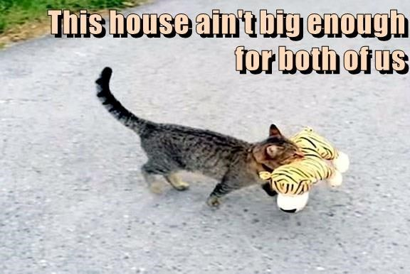 Cat - This house ain't big enough tor both of us