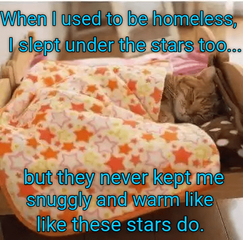 Organism - When I used to be homeless I slept under the stars too... but they never kept me snuggly and warm like like these stars do.