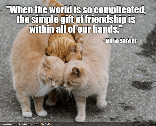"""Cat - """"When the world is so complicated, the simple gift of friendship is within all of our hands."""" Maria Shriver ICANHASCHEE2BURGER CcOM"""