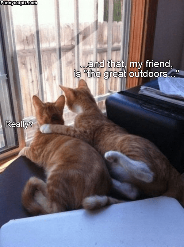 """Cat - Funnycatpix.com and that, my friend, is """"the great outdoors... Really?"""