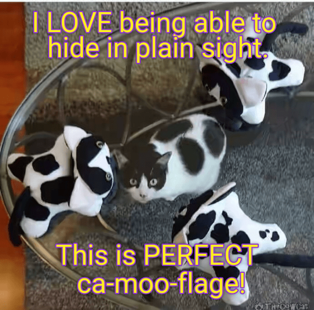 Photo caption - I LOVE being able to hide in plain sight This is PERFECT ca-moo-flage! TH COWCAT