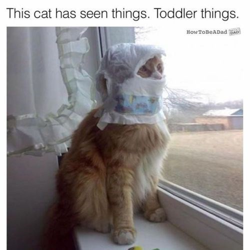 photo of a cat with diapers on his head