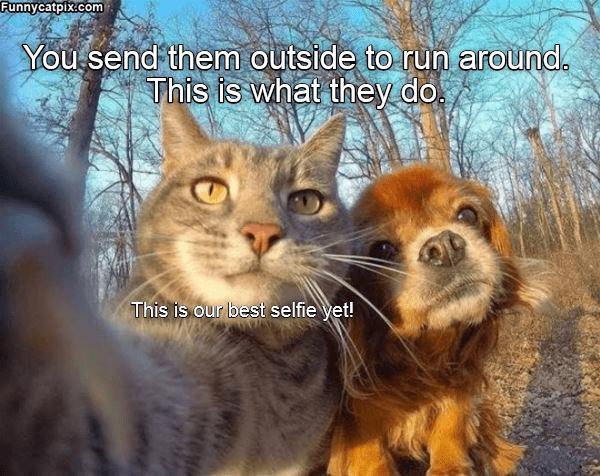 Memes Cats - 9068045824