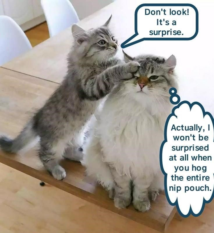 Funny meme of a cat covering another cat's eyes from behind to surprise him.