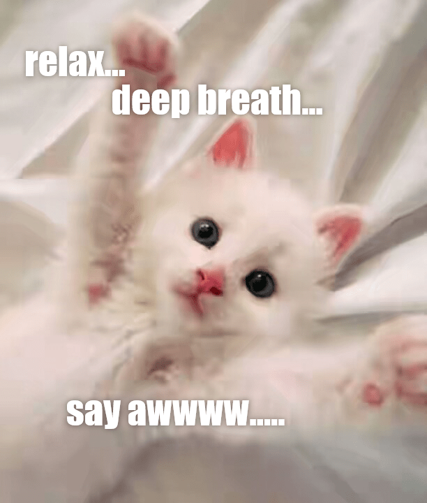 Funny meme of a cat playing doctor.