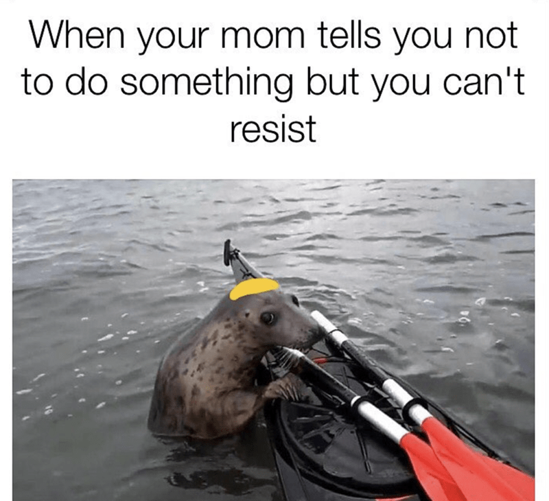 Vehicle - When your mom tells you not to do something but you can't resist