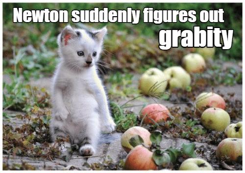 Funny cat meme of kitten named Newton learning about gravity.