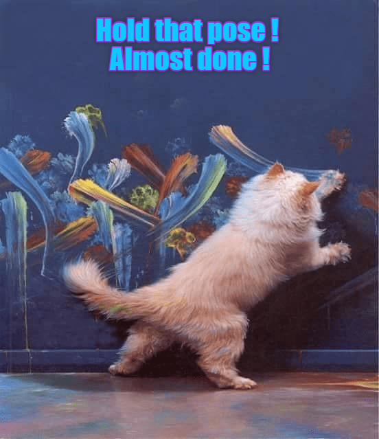 posing cat meme