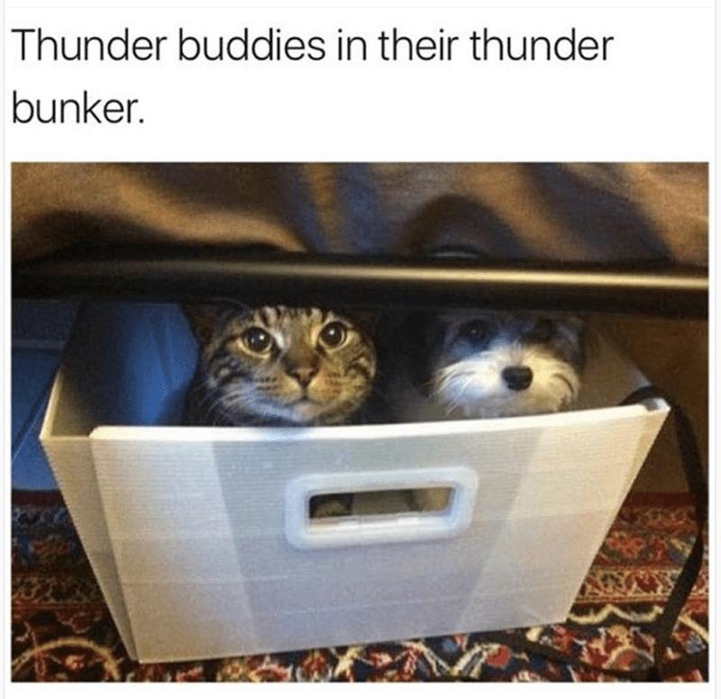 Cat - Thunder buddies in their thunder bunker.
