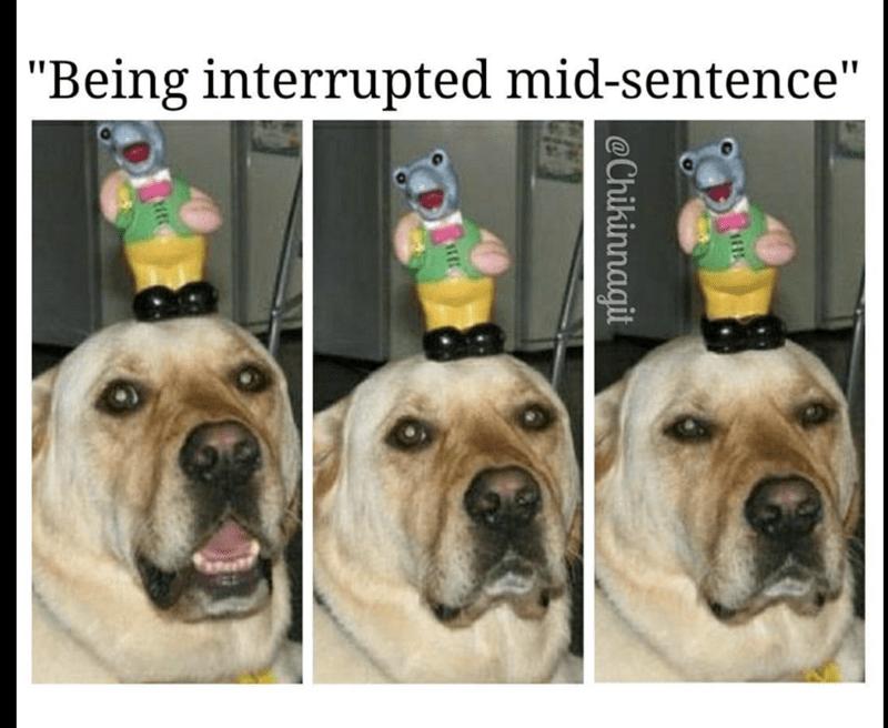 "Dog - ""Being interrupted mid-sentence"" Chikinnagit"