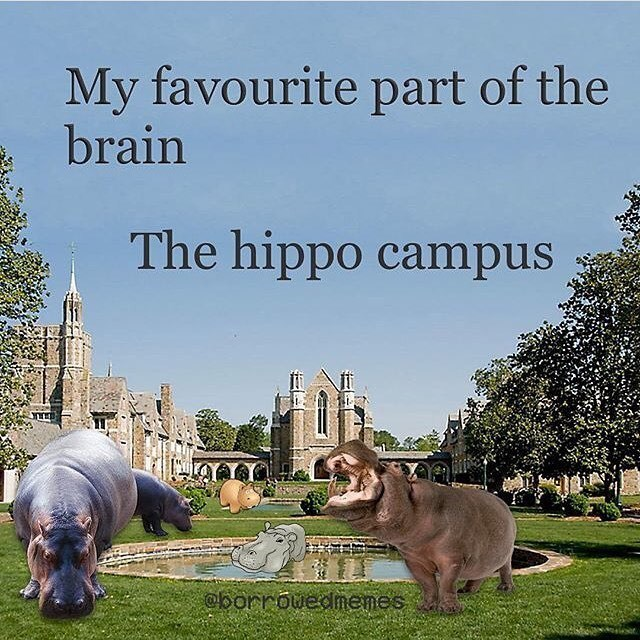 Adaptation - My favourite part of the brain The hippo campus borrouedmnemes