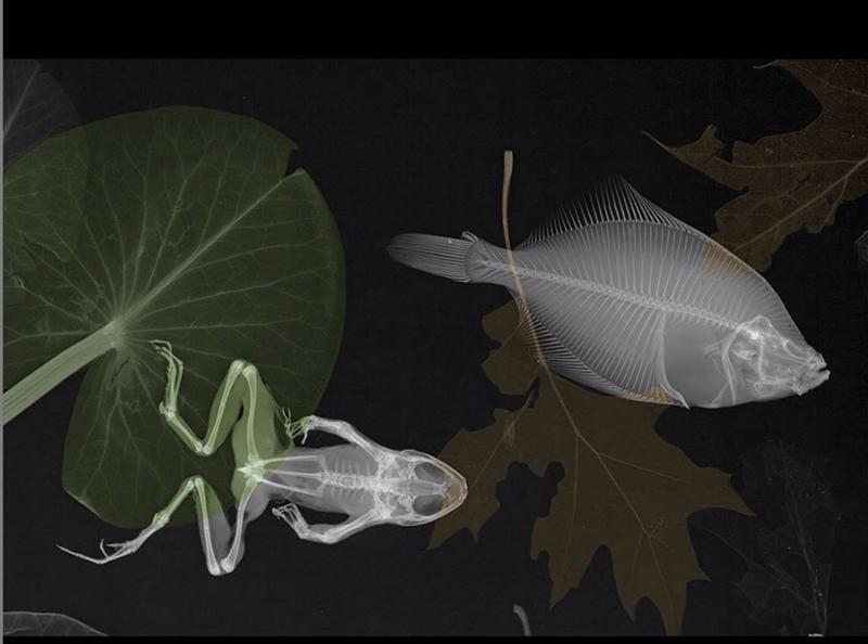 x-ray vision physics animal photos animals - 9068549