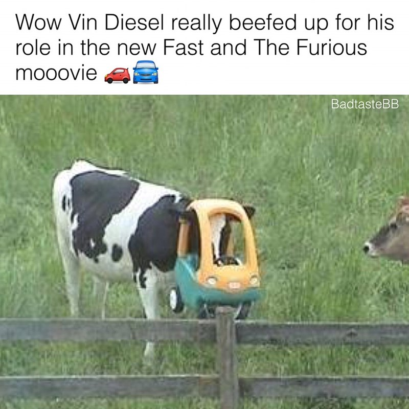 Dairy cow - Wow Vin Diesel really beefed up for his role in the new Fast and The Furious mooovie BadtasteBB