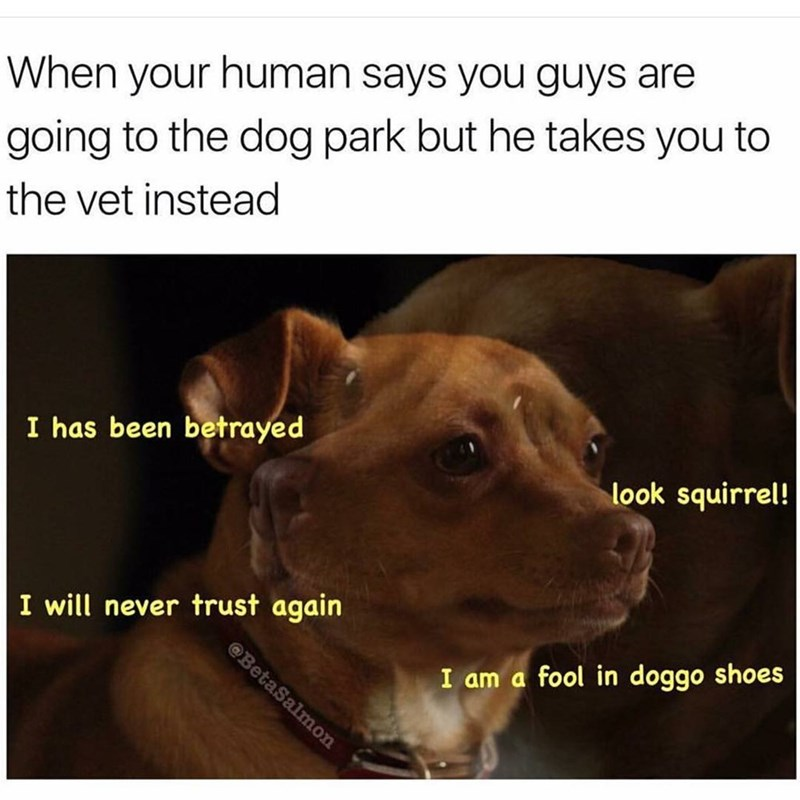 Funny meme about lying to your dog about going to the vet.
