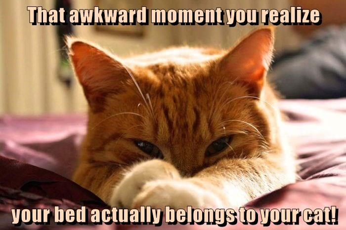 Cat meme about realizing that you bed now belongs to the cat.