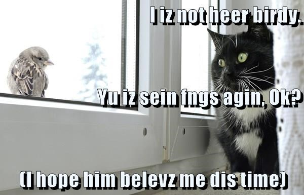 Funny meme of a cat using lolspeak to lure a bird into being hunted.
