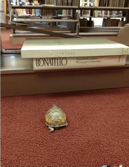 Turtle - HARTRES ONATELLO Ph lbl