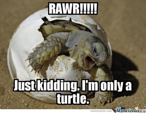 turtles are slow, but sure know how to be funny (27 memes that
