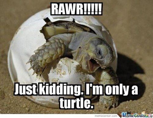 Turtle - RAWR!!!!! Just kidding.I'monly a turtle. MemeCenter& memecenter.com