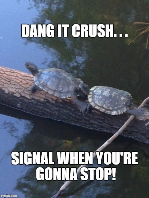 Sea turtle - DANG IT CRUSH... SIGNAL WHEN YOU'RE GONNA STOP! imgflip.com
