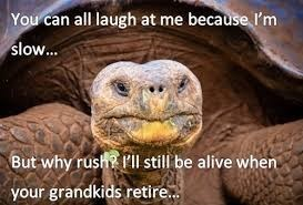 Tortoise - You can all laugh at me because I'm slow... But why rush Fl still be alive when your grandkids retire...