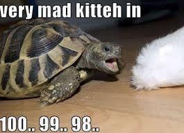 Tortoise - very mad kitteh in 100 99 98