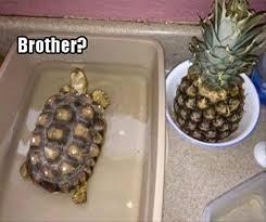 Tortoise - Brother?