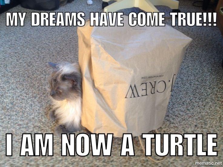 Cat - MY DREAMS HAVE COME TRUE!!! .CREW I AM NOW A TURTLE mematic.net