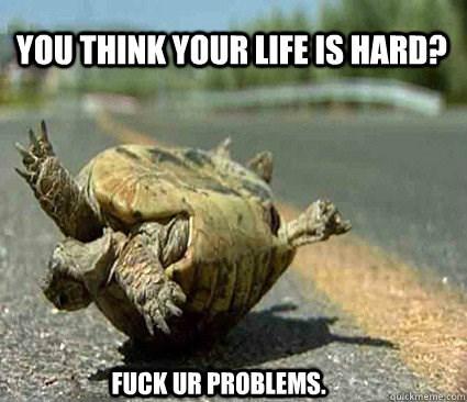Tortoise - YOUTHINKYOUR LIFE IS HARD? FUCK UR PROBLEMS quickmeme.com