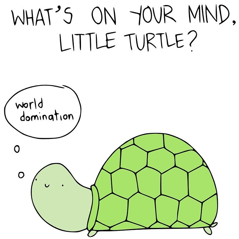 Tortoise - WHAT'S ON YOUR MIND LITTLE TURTLE? world domination O