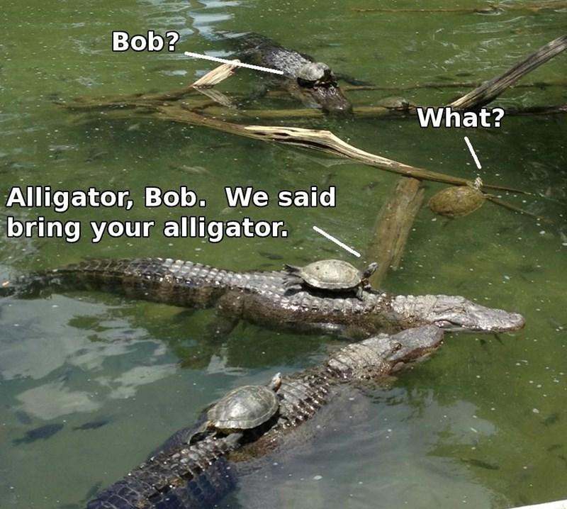 Reptile - Bob? What? Alligator, Bob. We said bring your alligator.