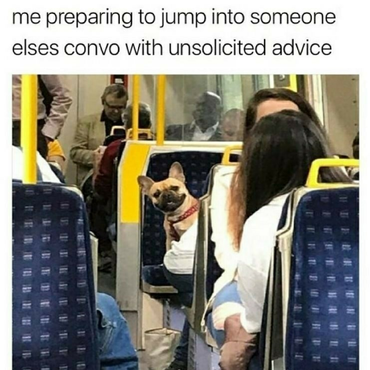 Funny meme about dog that looks like it's going to give unsolicited advice.