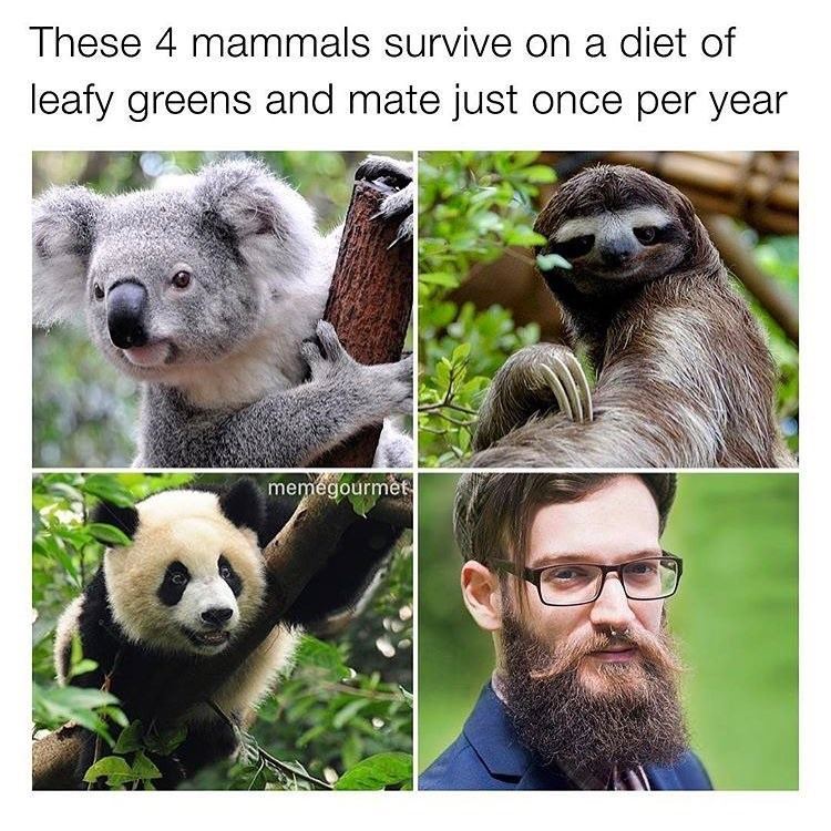 Funny meme and dis about animals that eat leafy greens and mate once a year, photo of a bearded hipster.