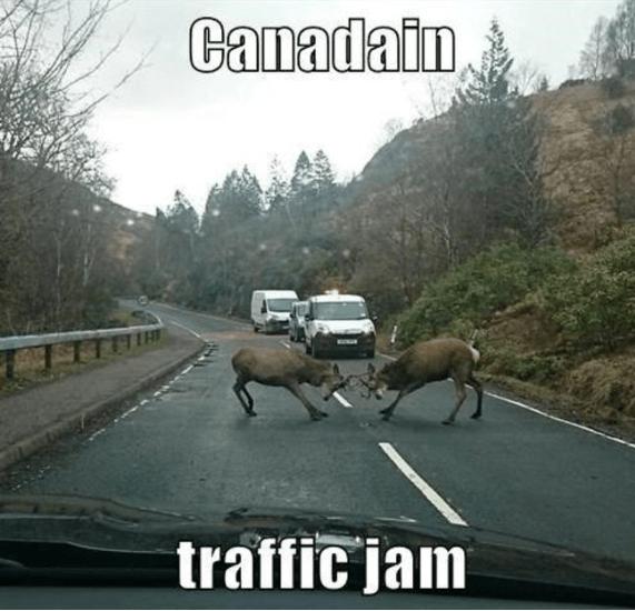 Mode of transport - Canadain, traffic jam