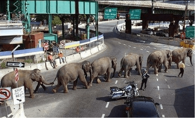 Elephant - ৯ ONE RAY STOP RED