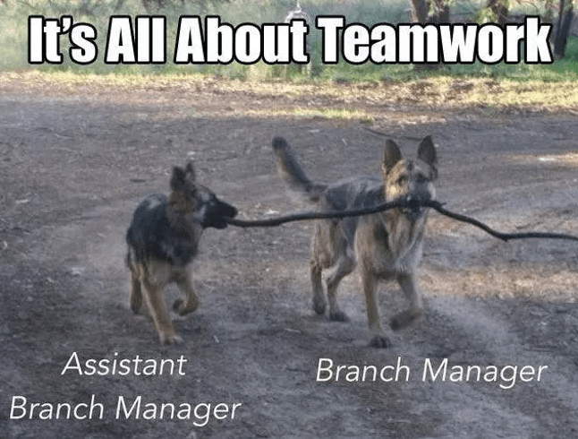 Vertebrate - It's All About Teamwork Assistant Branch Manager Branch Manager