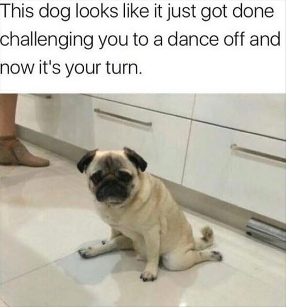 Pug - This dog looks like it just got done challenging you to a dance off and now it's your turn.