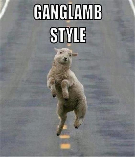 Photo caption - GANGLAMB STYLE