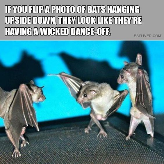 Organism - IFYOU FLIPA PHOTO OF BATS HANGING UPSIDE DOWN, THEY LOOK LIKE THEYRE HAVING A WICKED DANCE-OFF. EATLIVER.COM